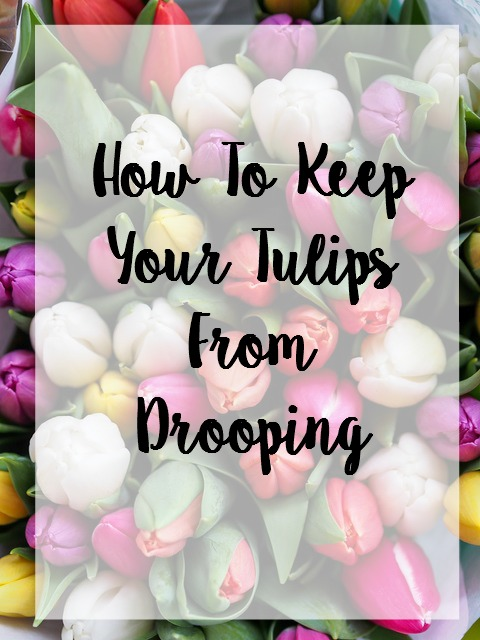 Keep Tulips From Drooping
